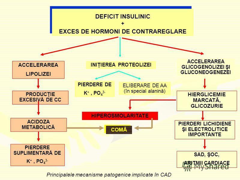 DEFICIT INSULINIC + EXCES DE HORMONI DE CONTRAREGLARE DEFICIT INSULINIC + EXCES DE HORMONI DE CONTRAREGLARE HIPEROSMOLARITATE COMĂ ACCELERAREA GLICOGENOLIZEI ŞI GLUCONEOGENEZEI ACCELERAREA LIPOLIZEI INIŢIEREA PROTEOLIZEI PRODUCŢIE EXCESIVĂ DE CC ACID