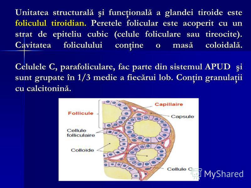 Unitatea structurală şi funcţională a glandei tiroide este foliculul tiroidian. Peretele folicular este acoperit cu un strat de epiteliu cubic (celule foliculare sau tireocite). Cavitatea foliculului conţine o masă coloidală. Celulele C, parafolicula