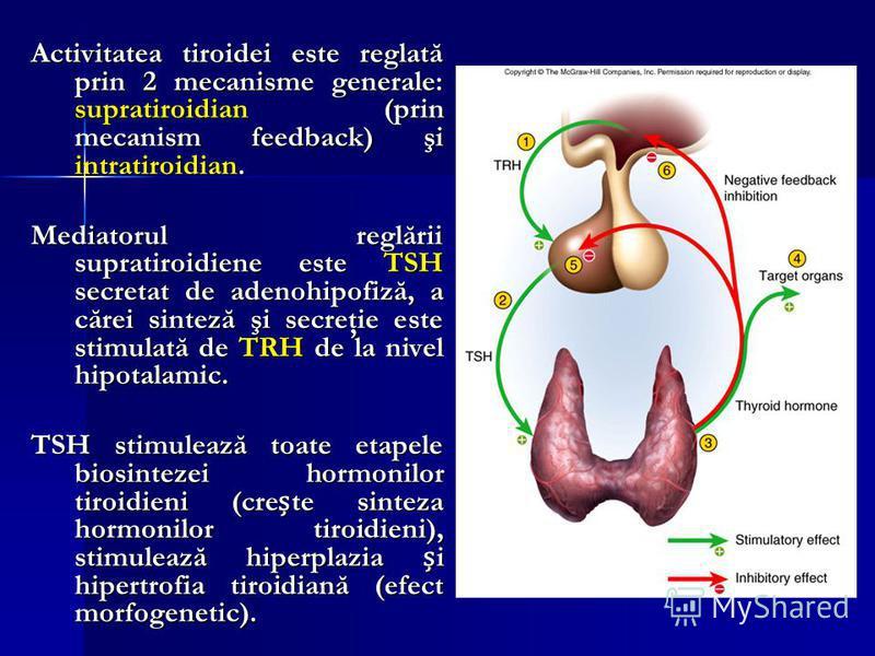 Activitatea tiroidei este reglată prin 2 mecanisme generale: supratiroidian (prin mecanism feedback) şi intratiroidian. Mediatorul reglării supratiroidiene este TSH secretat de adenohipofiză, a cărei sinteză şi secreţie este stimulată de TRH de la ni