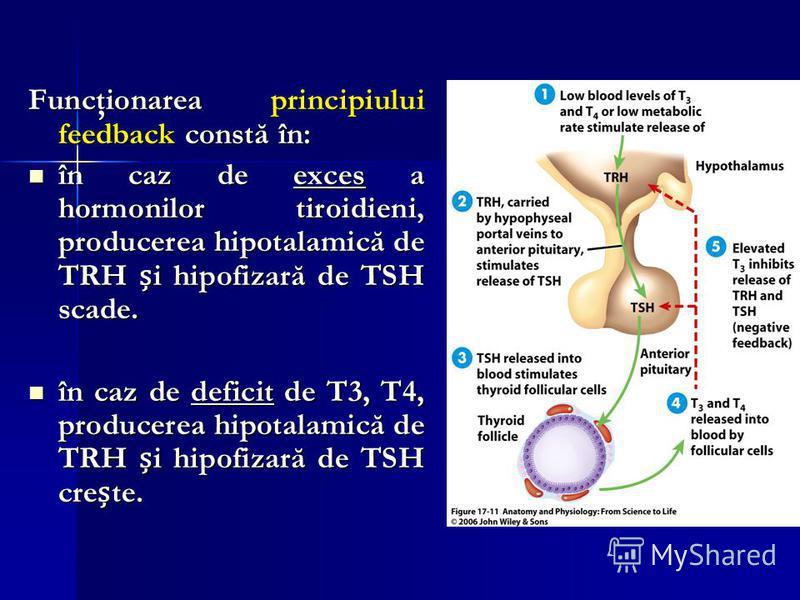 Funcţionarea principiului feedback constă în: în caz de exces a hormonilor tiroidieni, producerea hipotalamică de TRH i hipofizară de TSH scade. în caz de exces a hormonilor tiroidieni, producerea hipotalamică de TRH i hipofizară de TSH scade. în caz