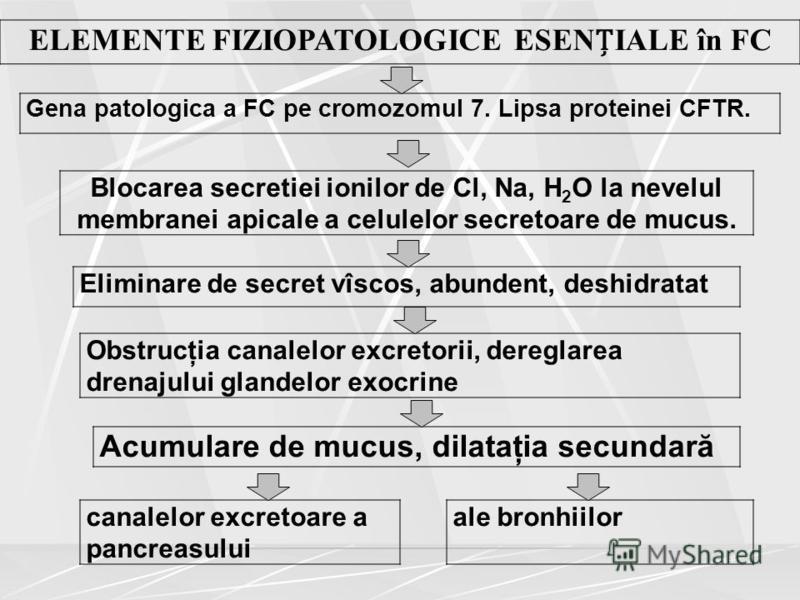 ELEMENTE FIZIOPATOLOGICE ESENIALE în FC Gena patologica a FC pe cromozomul 7. Lipsa proteinei CFTR. Blocarea secretiei ionilor de Cl, Na, H 2 O la nevelul membranei apicale a celulelor secretoare de mucus. Eliminare de secret vîscos, abundent, deshid