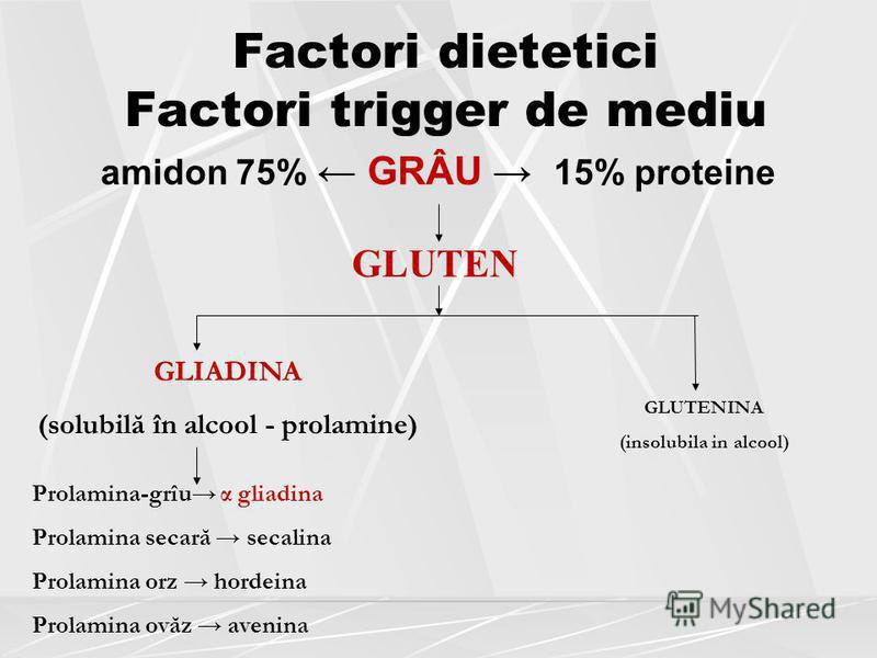 Factori dietetici Factori trigger de mediu amidon 75% GRÂU 15% proteine GLUTEN GLIADINA (solubilă în alcool - prolamine) GLUTENINA (insolubila in alcool) Prolamina-grîu α gliadina Prolamina secară secalina Prolamina orz hordeina Prolamina ovăz avenin