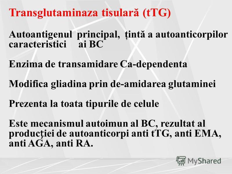 Transglutaminaza tisulară (tTG) Autoantigenul principal, ţintă a autoanticorpilor caracteristici ai BC Enzima de transamidare Ca-dependenta Modifica gliadina prin de-amidarea glutaminei Prezenta la toata tipurile de celule Este mecanismul autoimun al