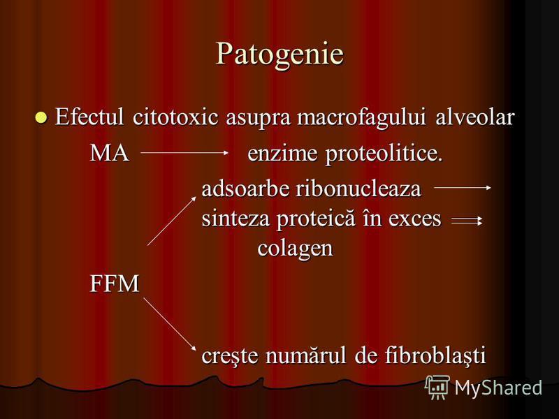Patogenie Efectul citotoxic asupra macrofagului alveolar Efectul citotoxic asupra macrofagului alveolar MA enzime proteolitice. adsoarbe ribonucleaza sinteza proteică în exces colagen FFM creşte numărul de fibroblaşti