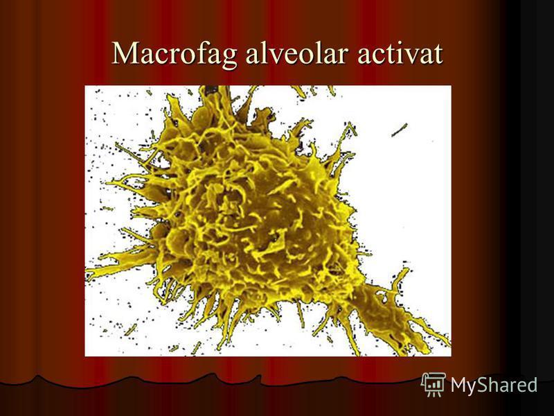 Macrofag alveolar activat