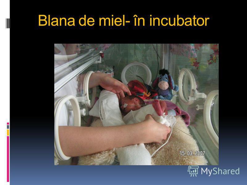 Blana de miel- în incubator