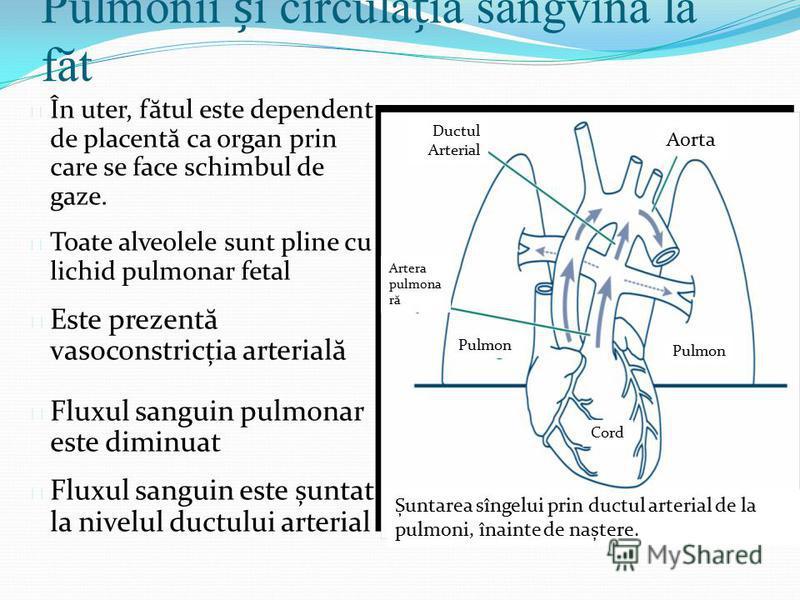 Pulmonii i circulaia sangvină la făt l În uter, f ă tul este dependent de placent ă ca organ prin care se face schimbul de gaze. l Toate alveolele sunt pline cu lichid pulmonar fetal l Este prezent ă vasoconstricția arterial ă l Fluxul sanguin pulmon