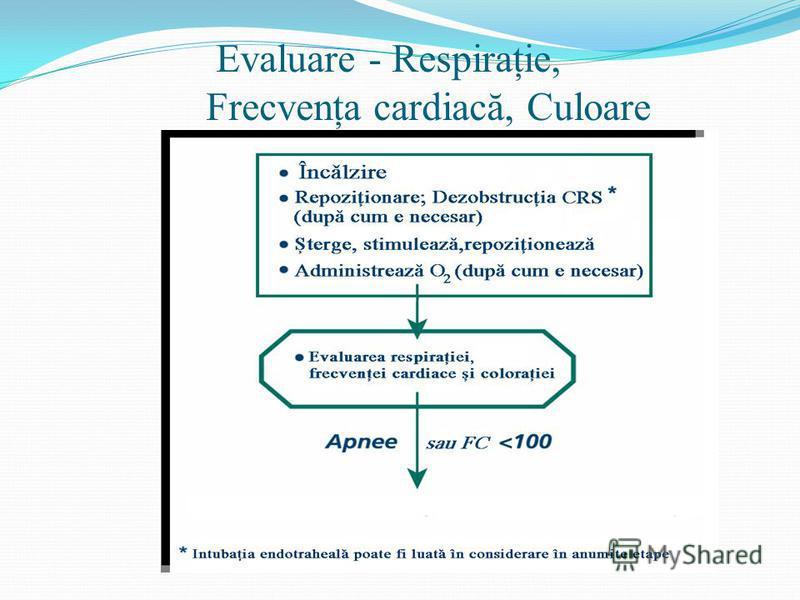 Evaluare - Respiraţie, Frecvenţa cardiacă, Culoare