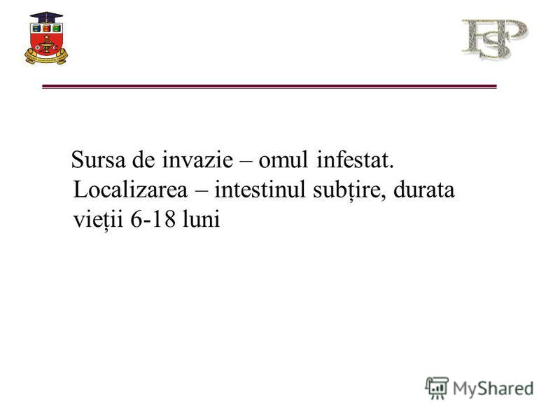Sursa de invazie – omul infestat. Localizarea – intestinul subţire, durata vieţii 6-18 luni