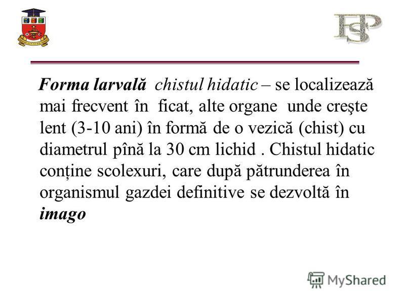 Forma larvală chistul hidatic – se localizează mai frecvent în ficat, alte organe unde creşte lent (3-10 ani) în formă de o vezică (chist) cu diametrul pînă la 30 cm lichid. Chistul hidatic conţine scolexuri, care după pătrunderea în organismul gazde