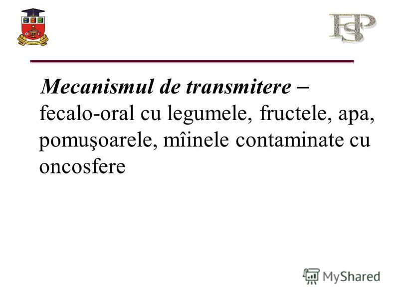 Mecanismul de transmitere – fecalo-oral cu legumele, fructele, apa, pomuşoarele, mîinele contaminate cu oncosfere