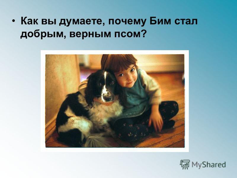 Как вы думаете, почему Бим стал добрым, верным псом?