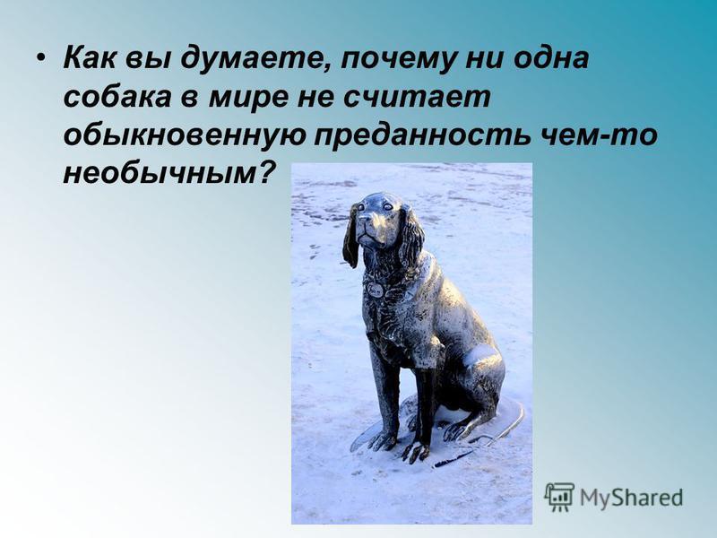 Как вы думаете, почему ни одна собака в мире не считает обыкновенную преданность чем-то необычным?