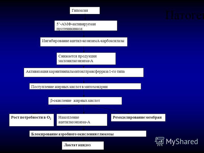 Патогенез Гипоксия 5-АМФ-активируемая протеинкиназа Ингибирование ацетил-коэнзимА-карбоксилазы Снижается продукция малонилкоэнзима-А Активизация карнитинпальмитоилтрансферраза 1-го типа Поступление жирных кислот в митохондрии -окисление жирных кислот