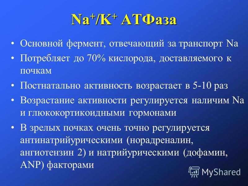 Na + /K + АТФаза Основной фермент, отвечающий за транспорт Na Потребляет до 70% кислорода, доставляемого к почкам Постнатально активность возрастает в 5-10 раз Возрастание активности регулируется наличии Na и глюкокортикоидными гормонами В зрелых поч