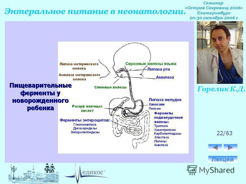 Горелик К.Д. Энтеральное питание в неонатологии. 22/63