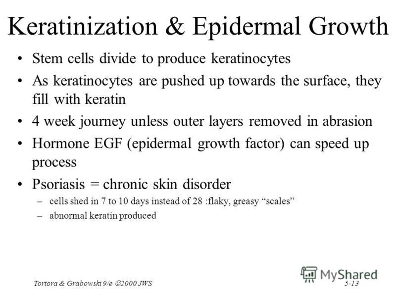 5-13 Tortora & Grabowski 9/e 2000 JWS Keratinization & Epidermal Growth Stem cells divide to produce keratinocytes As keratinocytes are pushed up towards the surface, they fill with keratin 4 week journey unless outer layers removed in abrasion Hormo