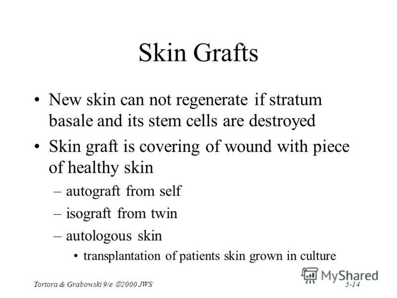 5-14 Tortora & Grabowski 9/e 2000 JWS Skin Grafts New skin can not regenerate if stratum basale and its stem cells are destroyed Skin graft is covering of wound with piece of healthy skin –autograft from self –isograft from twin –autologous skin tran