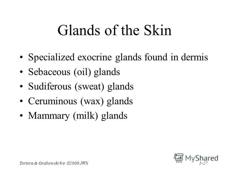 5-27 Tortora & Grabowski 9/e 2000 JWS Glands of the Skin Specialized exocrine glands found in dermis Sebaceous (oil) glands Sudiferous (sweat) glands Ceruminous (wax) glands Mammary (milk) glands