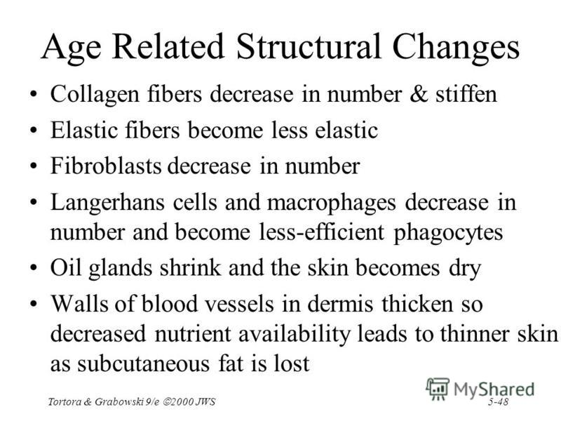 5-48 Tortora & Grabowski 9/e 2000 JWS Age Related Structural Changes Collagen fibers decrease in number & stiffen Elastic fibers become less elastic Fibroblasts decrease in number Langerhans cells and macrophages decrease in number and become less-ef