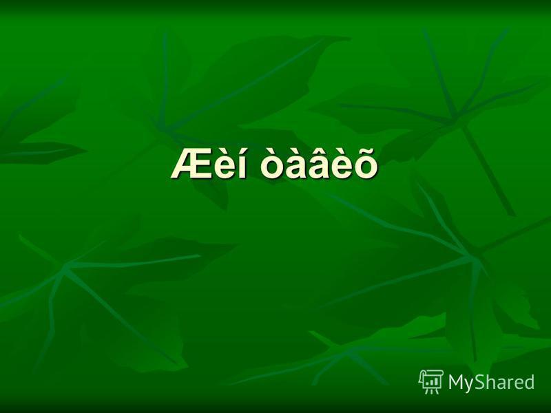 Æèí òàâèõ
