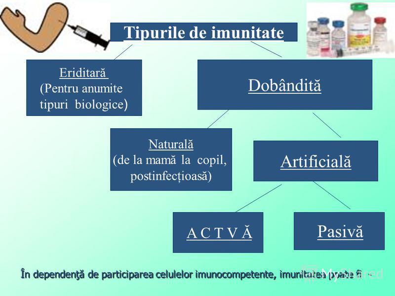 Tipurile de imunitate Eriditară (Pentru anumite tipuri biologice ) Pasivă Dobândită A C T V Ă Artificială Naturală (de la mamă la copil, postinfecţioasă) În dependenţă de participarea celulelor imunocompetente, imunitatea poate fi -