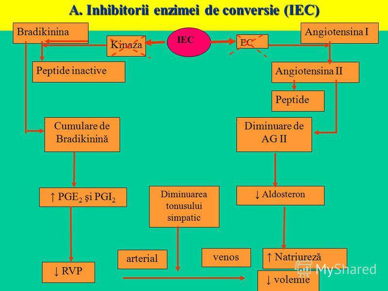 A. Inhibitorii enzimei de conversie (IEC) Bradikinina Peptide inactive Kinaza IEC EC Angiotensina II Peptide Cumulare de Bradikinină Diminuare de AG II PGE 2 şi PGI 2 Diminuarea tonusului simpatic Aldosteron RVP arterial venos Natriureză volemie Angi