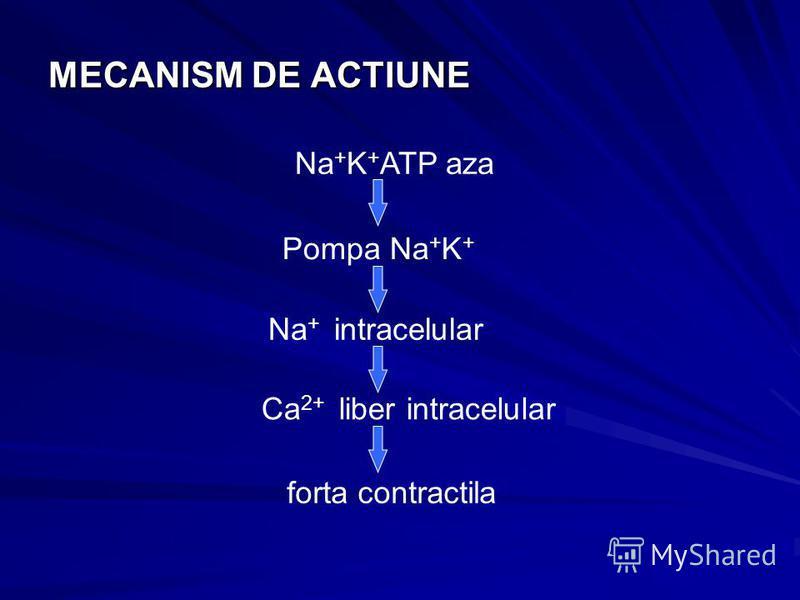 MECANISM DE ACTIUNE Na + K + ATP aza Pompa Na + K + Na + intracelular Ca 2+ liber intracelular forta contractila