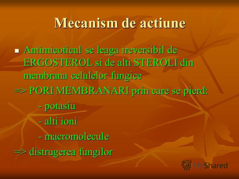 Mecanism de actiune Antimicoticul se leaga ireversibil de ERGOSTEROL si de alti STEROLI din membrana celulelor fungice Antimicoticul se leaga ireversibil de ERGOSTEROL si de alti STEROLI din membrana celulelor fungice => PORI MEMBRANARI prin care se