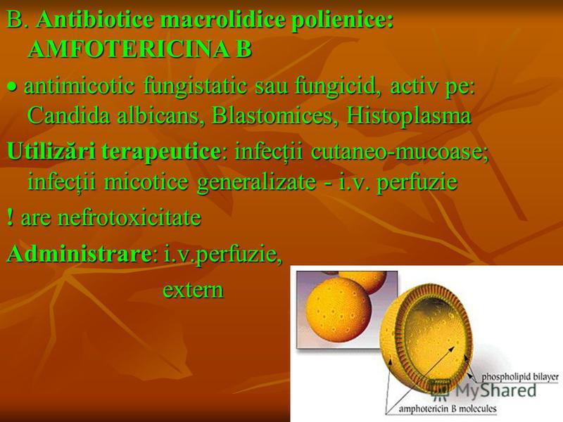 B. Antibiotice macrolidice polienice: AMFOTERICINA B antimicotic fungistatic sau fungicid, activ pe: Candida albicans, Blastomices, Histoplasma antimicotic fungistatic sau fungicid, activ pe: Candida albicans, Blastomices, Histoplasma Utilizări terap
