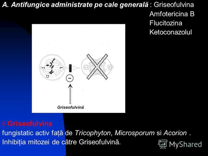 A. Antifungice administrate pe cale generală : Griseofulvina Amfotericina B Flucitozina Ketoconazolul Griseofulvina fungistatic activ faţă de Tricophyton, Microsporum si Acorion. Inhibiţia mitozei de către Griseofulvină.