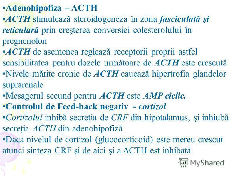 Adenohipofiza – ACTH ACTH stimulează steroidogeneza în zona fasciculată şi reticulară prin creşterea conversiei colesterolului în pregnenolon ACTH de asemenea reglează receptorii proprii astfel sensibilitatea pentru dozele următoare de ACTH este cres