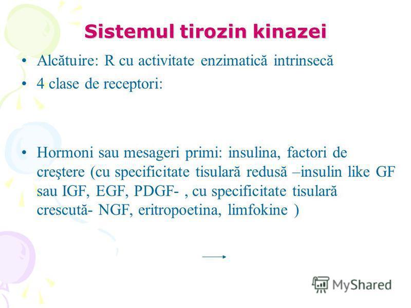 Sistemul tirozin kinazei Alcătuire: R cu activitate enzimatică intrinsecă 4 clase de receptori: Hormoni sau mesageri primi: insulina, factori de creştere (cu specificitate tisulară redusă –insulin like GF sau IGF, EGF, PDGF-, cu specificitate tisular