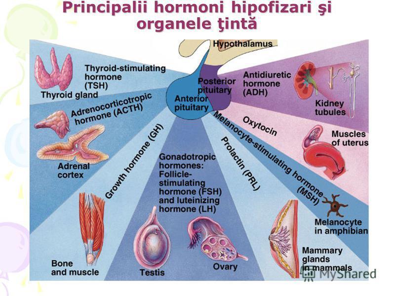 Principalii hormoni hipofizari şi organele ţintă