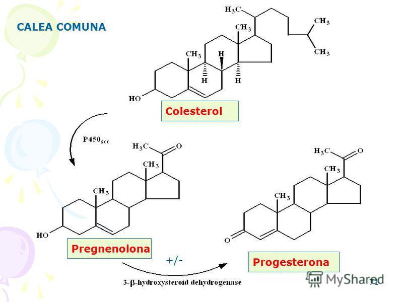 71 CALEA COMUNA Colesterol Pregnenolona Progesterona +/-