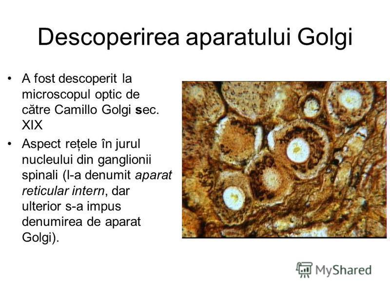 Descoperirea aparatului Golgi A fost descoperit la microscopul optic de către Camillo Golgi sec. XIX Aspect reţele în jurul nucleului din ganglionii spinali (l-a denumit aparat reticular intern, dar ulterior s-a impus denumirea de aparat Golgi).