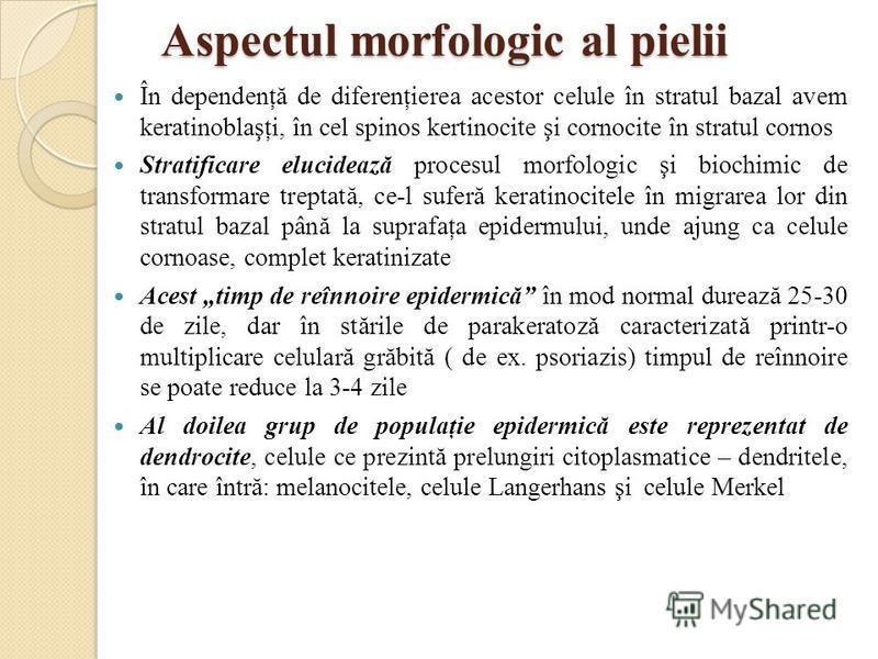 Aspectul morfologic al pielii În dependenţă de diferenţierea acestor celule în stratul bazal avem keratinoblaşţi, în cel spinos kertinocite şi cornocite în stratul cornos Stratificare elucidează procesul morfologic şi biochimic de transformare trepta