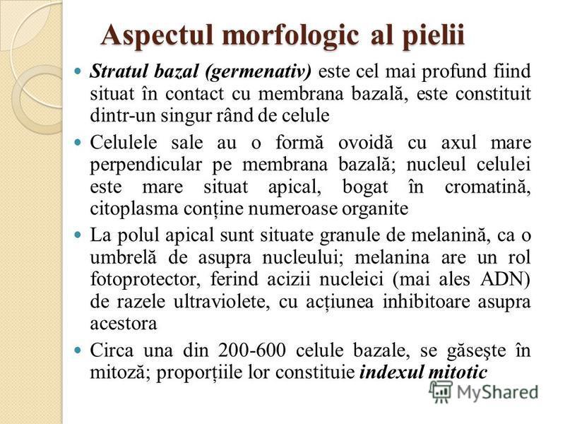 Aspectul morfologic al pielii Stratul bazal (germenativ) este cel mai profund fiind situat în contact cu membrana bazală, este constituit dintr-un singur rând de celule Celulele sale au o formă ovoidă cu axul mare perpendicular pe membrana bazală; nu