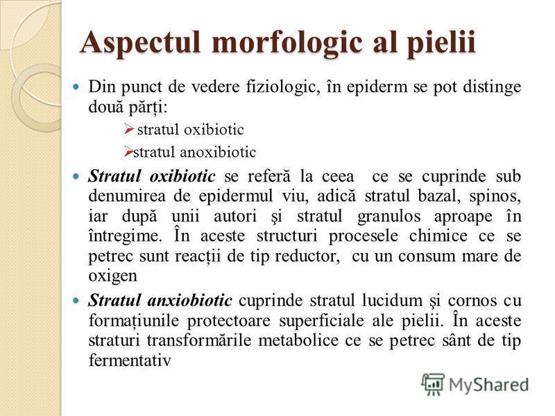 Aspectul morfologic al pielii Din punct de vedere fiziologic, în epiderm se pot distinge două părţi: stratul oxibiotic stratul anoxibiotic Stratul oxibiotic se referă la ceea ce se cuprinde sub denumirea de epidermul viu, adică stratul bazal, spinos,