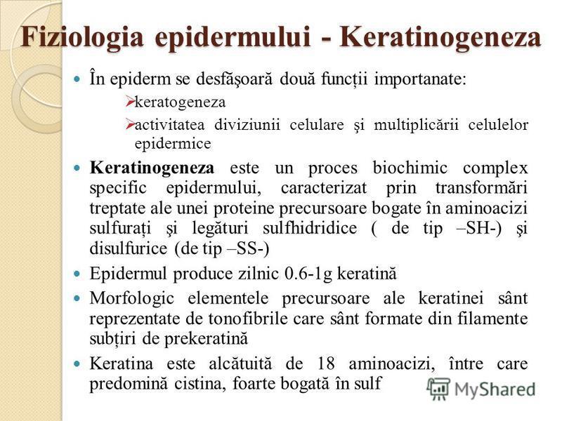 Fiziologia epidermului - Keratinogeneza În epiderm se desfăşoară două funcţii importanate: keratogeneza activitatea diviziunii celulare şi multiplicării celulelor epidermice Keratinogeneza este un proces biochimic complex specific epidermului, caract