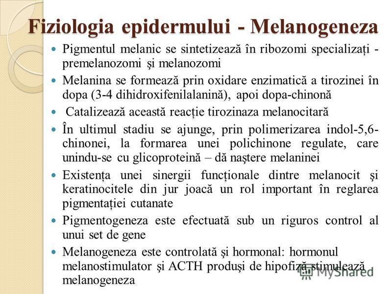 Fiziologia epidermului - Melanogeneza Fiziologia epidermului - Melanogeneza Pigmentul melanic se sintetizează în ribozomi specializaţi - premelanozomi şi melanozomi Melanina se formează prin oxidare enzimatică a tirozinei în dopa (3-4 dihidroxifenila