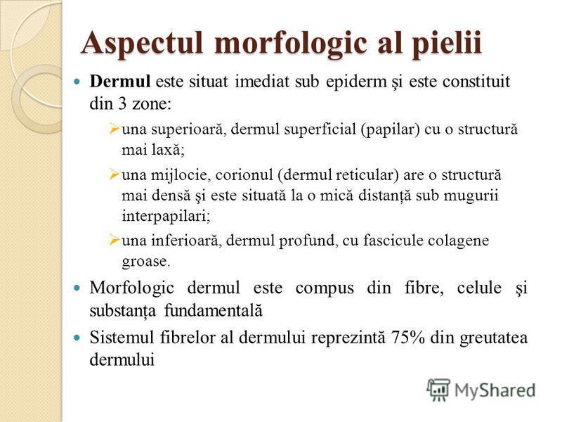 Aspectul morfologic al pielii Dermul este situat imediat sub epiderm şi este constituit din 3 zone: una superioară, dermul superficial (papilar) cu o structură mai laxă; una mijlocie, corionul (dermul reticular) are o structură mai densă şi este situ