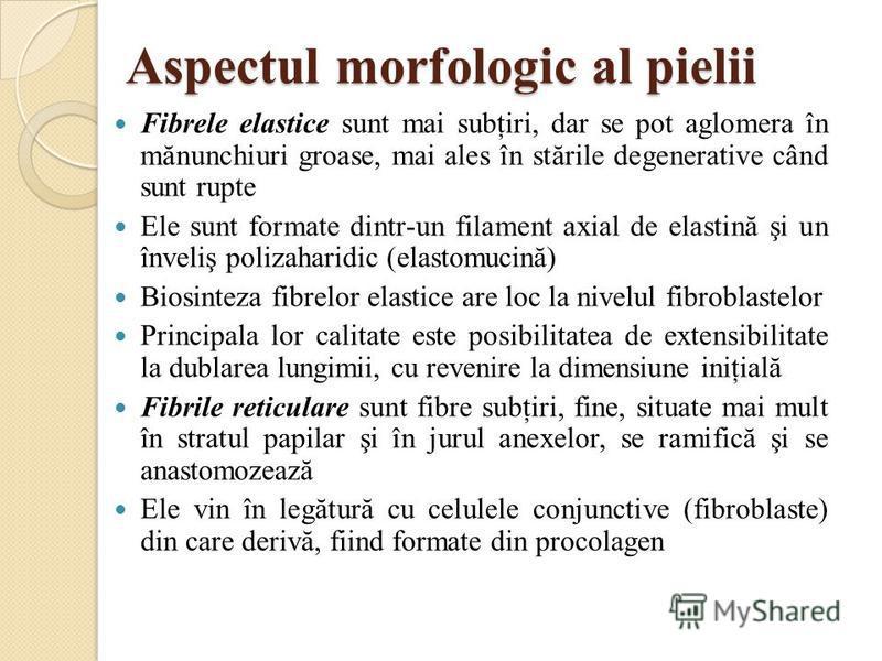 Aspectul morfologic al pielii Fibrele elastice sunt mai subţiri, dar se pot aglomera în mănunchiuri groase, mai ales în stările degenerative când sunt rupte Ele sunt formate dintr-un filament axial de elastină şi un înveliş polizaharidic (elastomucin
