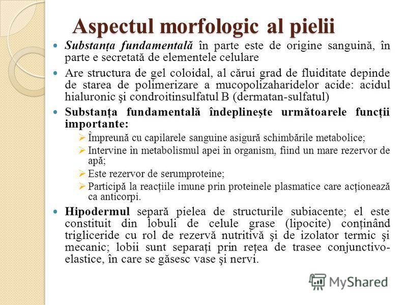 Aspectul morfologic al pielii Substanţa fundamentală în parte este de origine sanguină, în parte e secretată de elementele celulare Are structura de gel coloidal, al cărui grad de fluiditate depinde de starea de polimerizare a mucopolizaharidelor aci
