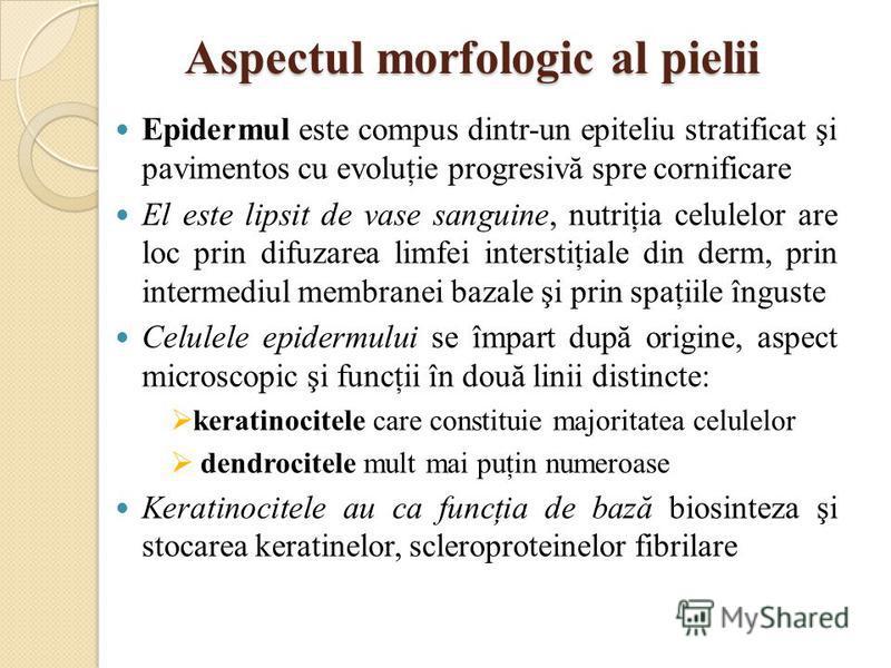 Aspectul morfologic al pielii Epidermul este compus dintr-un epiteliu stratificat şi pavimentos cu evoluţie progresivă spre cornificare El este lipsit de vase sanguine, nutriţia celulelor are loc prin difuzarea limfei interstiţiale din derm, prin int