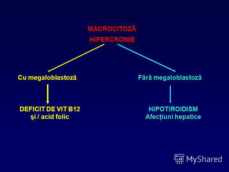 MACROCITOZĂ HIPERCROMIE Cu megaloblastoză Fără megaloblastoză DEFICIT DE VIT B12 şi / acid folic HIPOTIROIDISM Afecţiuni hepatice