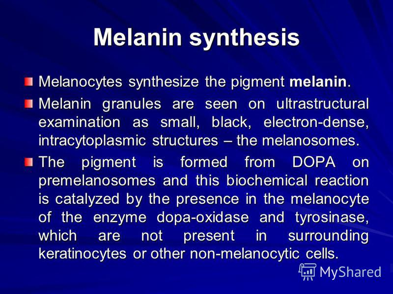 Melanin synthesis Melanocytes synthesize the pigment melanin. Melanin granules are seen on ultrastructural examination as small, black, electron-dense, intracytoplasmic structures – the melanosomes. The pigment is formed from DOPA on premelanosomes a
