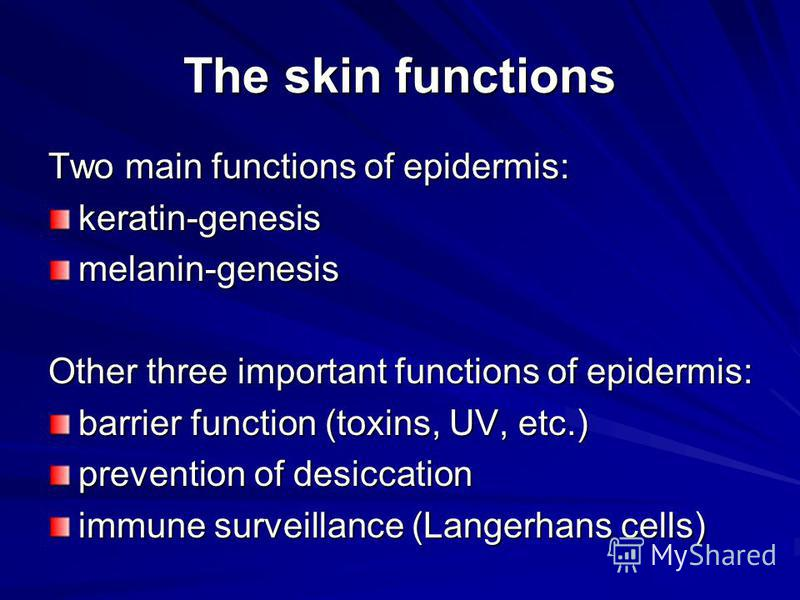 The skin functions Two main functions of epidermis: keratin-genesismelanin-genesis Other three important functions of epidermis: barrier function (toxins, UV, etc.) prevention of desiccation immune surveillance (Langerhans cells)
