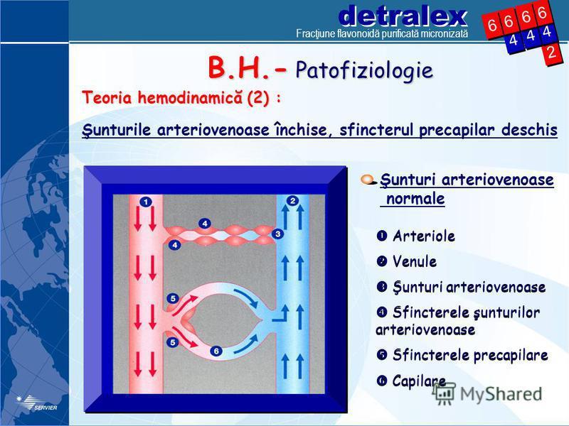 detralex Fracţiune flavonoidă purificată micronizată 2 2 4 4 4 4 6 6 4 4 6 6 6 6 6 6 Şunturi arteriovenoase normale Arteriole Venule Şunturi arteriovenoase Sfincterele şunturilor arteriovenoase Sfincterele precapilare Capilare Arteriole Venule Şuntur