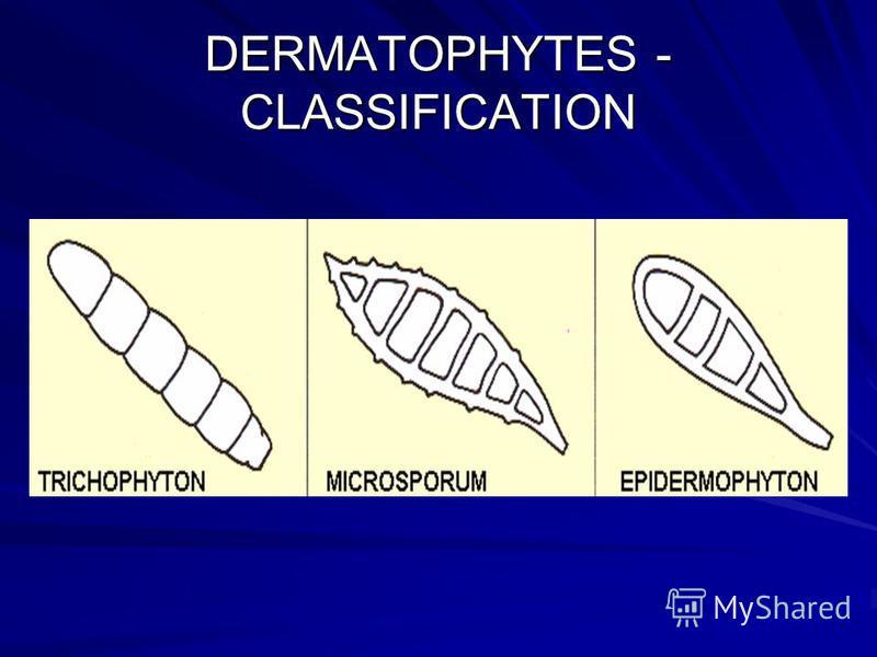 DERMATOPHYTES - CLASSIFICATION